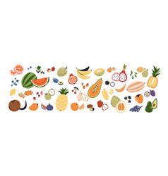 set different fruits and berries collection vector image