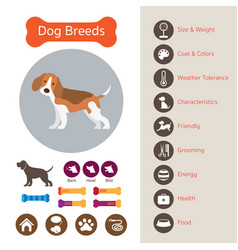 dog breeds infographic vector image