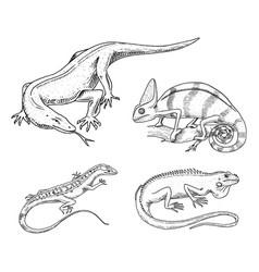 chameleon lizard american green iguana reptiles vector image vector image