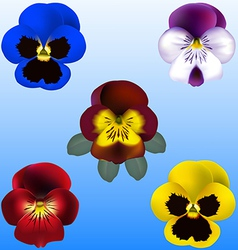 pansy and violets vector image vector image
