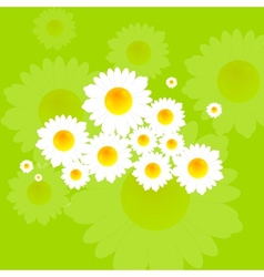 Bright summer background with camomile flowers vector
