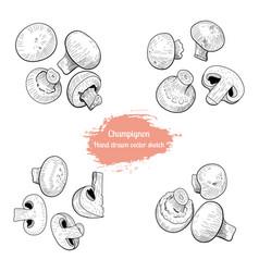 champignon handdrawn sketch vector image