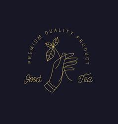 herbal black green tea thin line logo vector image
