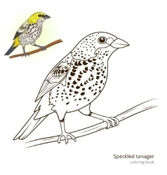 Speckled tanager color book vector