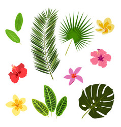 Tropical leaves and flowers summer elements for vector