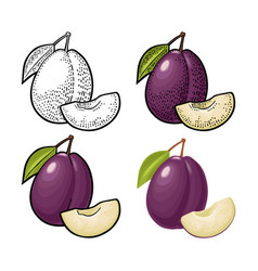 whole and slice plum with seed and leaf vector image
