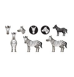 zebra set vector image