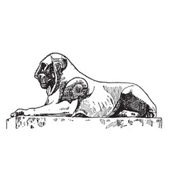 egyptian lion is found in the capital of rome vector image vector image