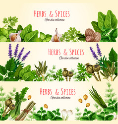 Fresh green herbs and spices banner set vector