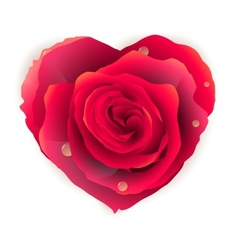 Isolated beautiful red rose heart EPS 10 vector image