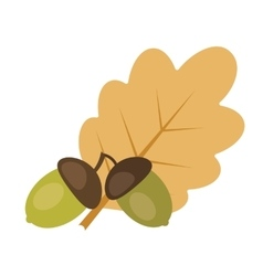 Two acorns and oak leaf vector image