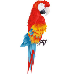 A bright macaw parrot isolated on white background vector