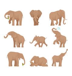 african large elephants big wild elephants exact vector image