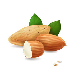 Almonds kernels and leaves realistic vector