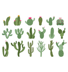 cute cactus succulents and cacti flower green vector image