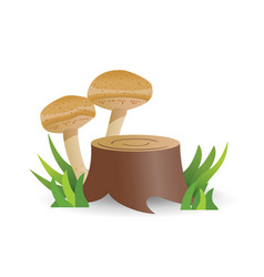 edible mushrooms vegetable healthy food vector image