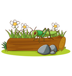 Isolated picture grasshopper on log vector