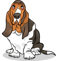basset hound dog cartoon vector image