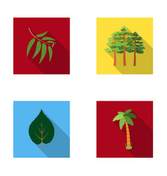 Branch zucalyptus pine leaf palmforest set vector