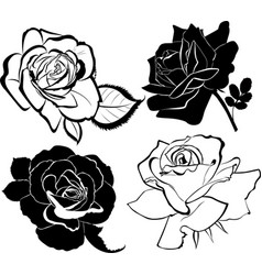 collection roses flowers isolated vector image