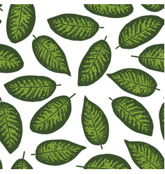 Dieffenbachia tropical leaf seamless pattern vector