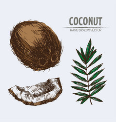 Digital detailed coconut hand vector