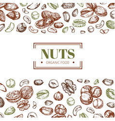 Background with nuts cashew and walnut pistachio vector