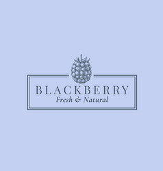 blackberry abstract sign symbol or logo vector image