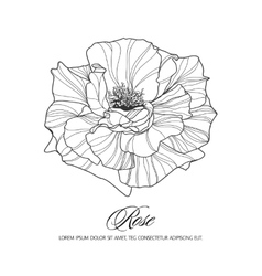 Greeting card with rose ink sketch vector image