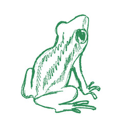 tree frog tropical animal vector image
