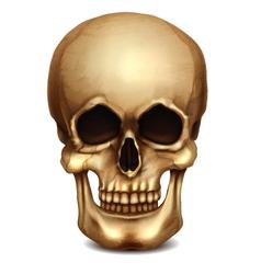 Realistic Skull vector image vector image