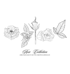 Rose sketch collection Hand drawn flower set vector image