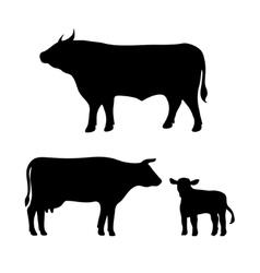 cow bull calf vector image vector image