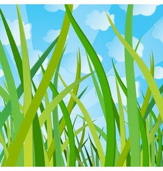 ecological background with a grass vector image