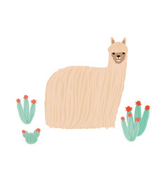 Funny long-haired alpaca isolated on white vector