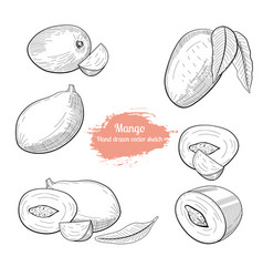 mango handdrawn sketch vector image