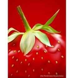 strawberry vs vector image
