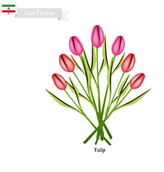 Tulip Flowers The Famous Flower of Iran vector image
