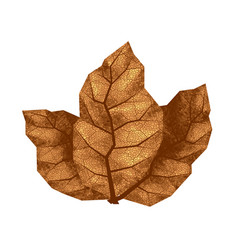 three dry tobacco leaves vector image