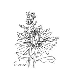 Flower hand drawn aster vector