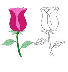 hand drawing rose flower isolated on white eps 10 vector image