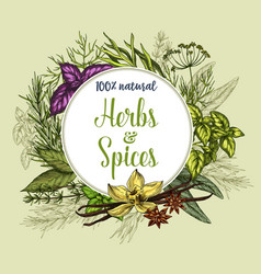 Poster of spices and herbs seasonings vector