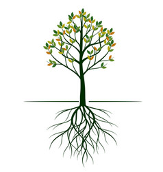 shape tree with leaves and roots vector image