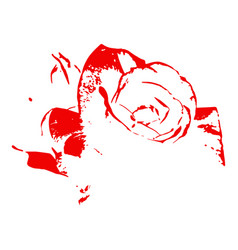 bloody rose on white background vector image