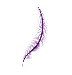elegant feather cartoon vector image