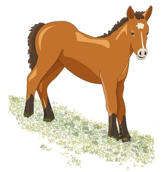 Foal grazing on steep terrain vector