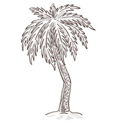 Island nature palm tree growing from sand vector