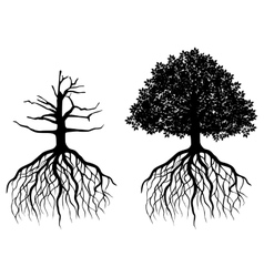 Isolated tree with roots vector image