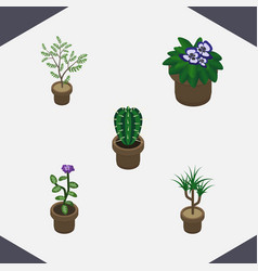 Isometric houseplant set of flower houseplant vector