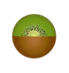Kiwi fruit isolated vector